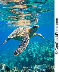tortue, natation, vert, mer, océan