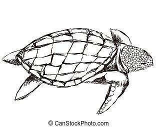 tortue, outline., sketch., dessin, isolé, illustration, main, arrière-plan., rugueux, vecteur, ligne, blanc, natation