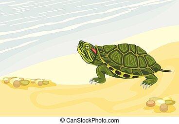 tortue, rivage, sablonneux