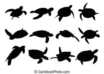 tortue, silhouettes, vecteur