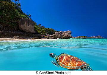 tortue,  similan, vert, îles