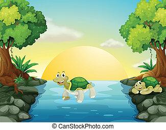 tortue, sourire, rivière