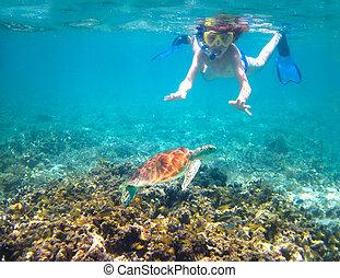 tortue, suivant, exotique, mer, enfant,  Snorkeling