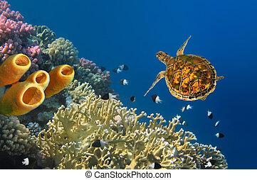 tortue, tube, jaune, éponges