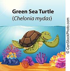 tortue, vert, mer, océan