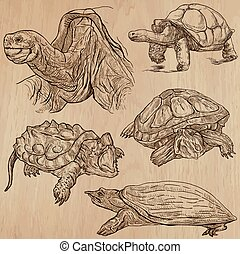 tortues, -, main, vecteur, dessiné, meute