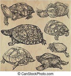 tortues, -, une, main, dessiné, vecteur, collection.,...