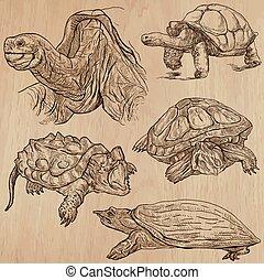 tortues, -, une, main, dessiné, vecteur, meute