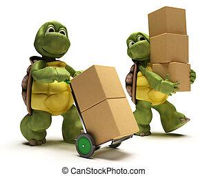 tortuga, con, cajas, para, envío