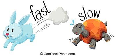 tortuga, conejo, rápido, lento, corre