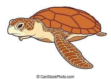 Tortuga Reptil Silueta Mar Color Animal Tortuga Reptil
