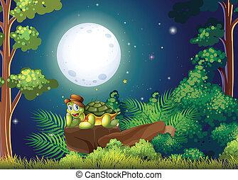 tortuga, medio, bosque, sobre, roca, sonriente