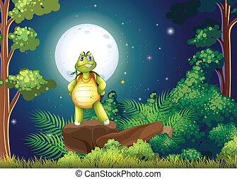 tortuga, posición, medio, bosque, sobre, roca