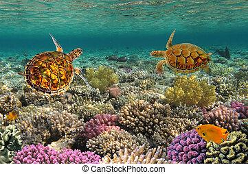 tortuga, swiming, arrecife, encima, verde, mar, coral