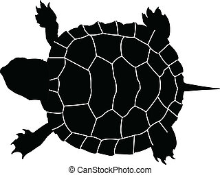 tortuga, vector, -