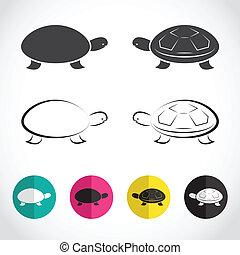 tortuga, vector, grupo