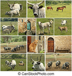 toscan, ferme, collage
