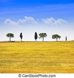 toscana, ciprés, árboles, y, verde, fields., san, quirico,...