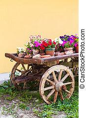 toscana, flores