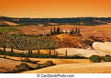 toscana, granja, viña, casa, hills., toscano, paisaje, sunset.