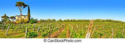 toscana, paisaje, panorama, con, viña, en, ocaso