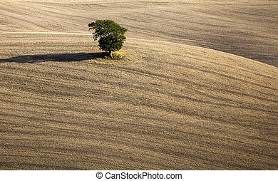 toscana, tuscany, heuvels, panorama, -, weide, italië, landscape