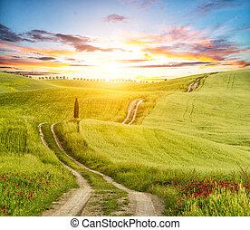 toscane, beau, paysage, piste