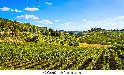 toscane, italie, vignoble, radda, panorama, sunset., chianti