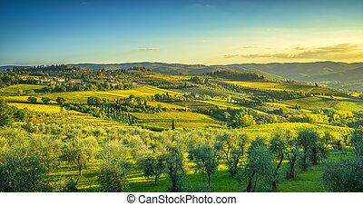 toscane, vignoble, panzano, italie, panorama, sunset., chianti