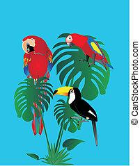 toscano, forest.., pappagalli, pioggia, seduta