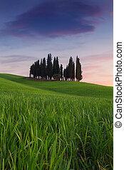 Toskana,  cypress, träd, solnedgång, vår, landskap, typisk