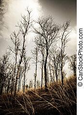 tot, Bäume, hintergrund