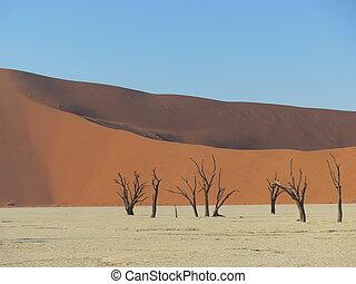 tote bäume, in, der, wüste