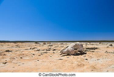 totenschädel, in, wüste