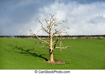 toter baum, in, greenfield, landschaft.