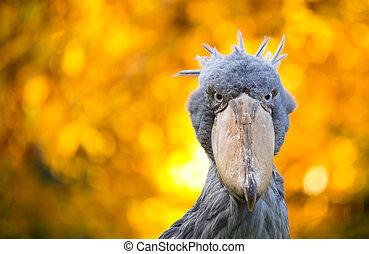 toucan, 鳥, カラフルである