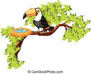 Toucan and nest on the tree