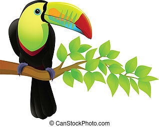Toucan bird - vector illustration of toucan bird isolated