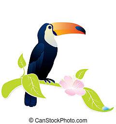 toucan bird - exotic bird Toucan sitting on a flowering...