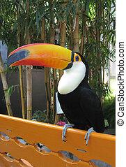 Toucan bird on orange bench
