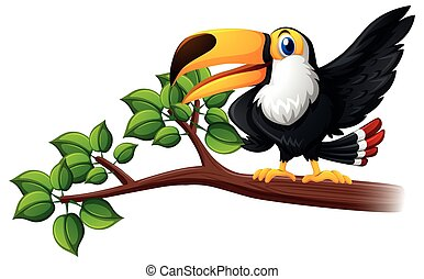 Toucan bird on the branch