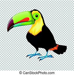 Toucan bird on transparent background illustration
