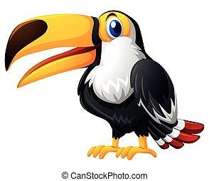 Toucan bird on white background