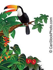 Toucan bird - Vector illustration of toucan bird