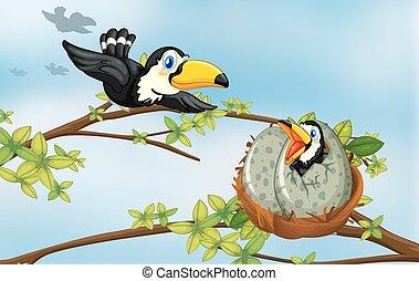 Toucan birds on the nest