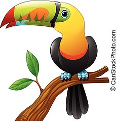 Toucan cartoon sitting on branch