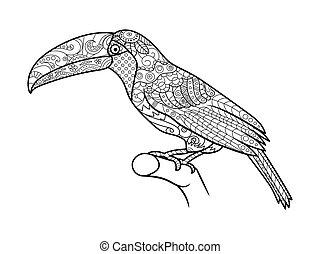 Toucan coloring book for adults vector - Toucan bird...