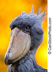 toucan, fugl, farverig