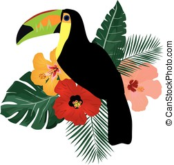 toucan - vector toucan bird