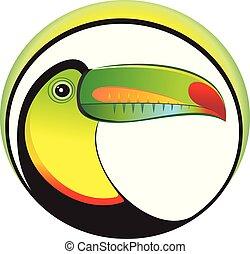 Toucan - Keel billed toucan